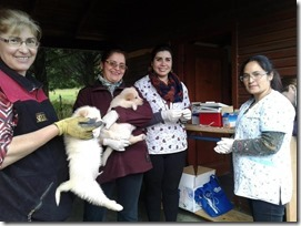 FOTO operativo veterinario junio