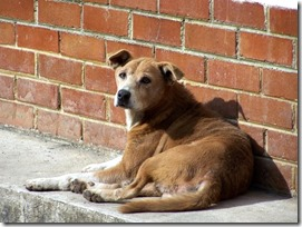 FOTO seminario tenencia de mascotas