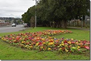 Jardines de la comuna de Villarrica una eterna primavera (2)